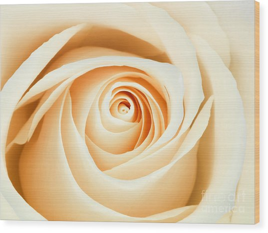 Macro Of A Peach And Pink Rose Wood Print