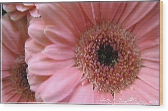 Macro Pink Gerbera Daisies Wood Print