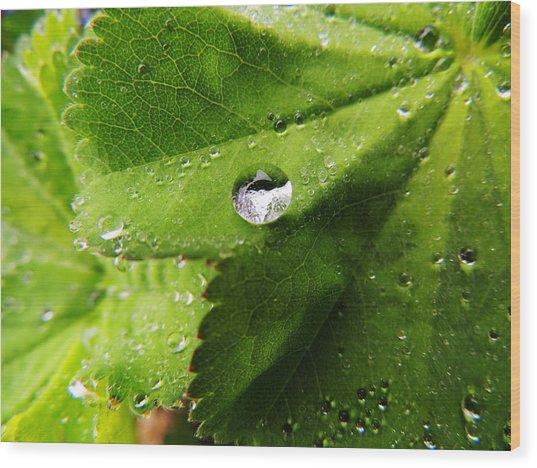 Macro Raindrop On Leaf Wood Print