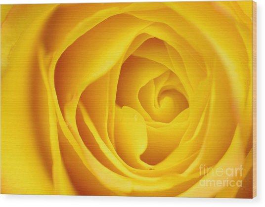 Macro Yellow Rose Wood Print by Patrick Dinneen