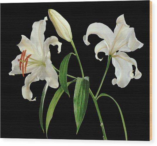 Madonna Lily (lilium Candidum) Wood Print by Gilles Mermet