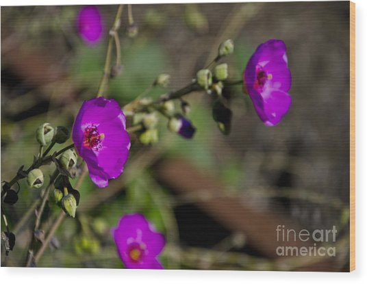 Magenta Flowers Wood Print by Aaron Fromenthal