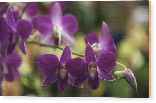 Magenta Orchids Wood Print