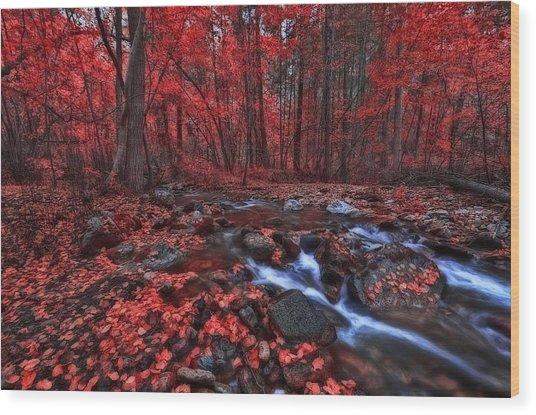 Magic Forest 1 Wood Print