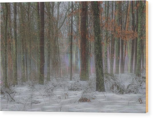 Magic In The Fog 2 Wood Print