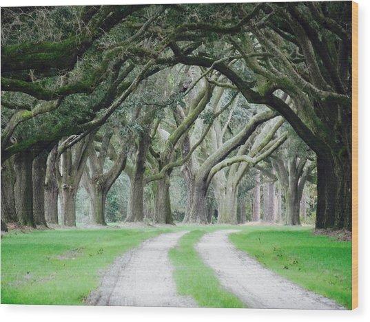 Magic Live Oaks Wood Print