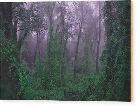 Magical Fairy Forest Wood Print