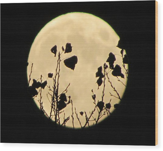Magical Moon Wood Print