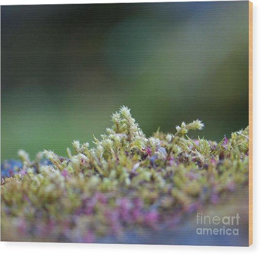 Magical Moss Wood Print by Sarah Crites