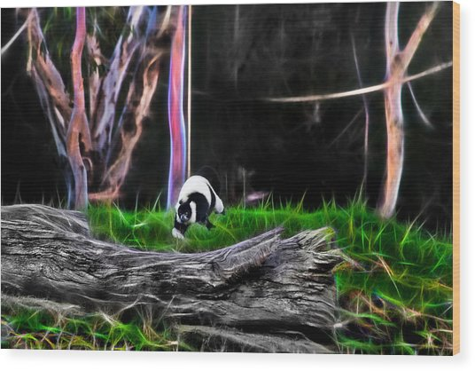 Walk In Magical Land Of The Black And White Ruffed Lemur Wood Print