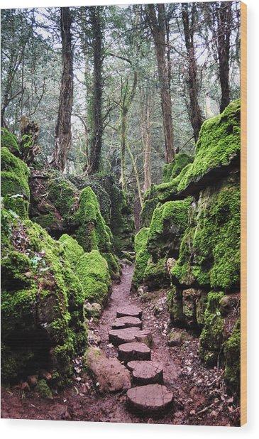 Magic's Pathway Wood Print by Tara Hall