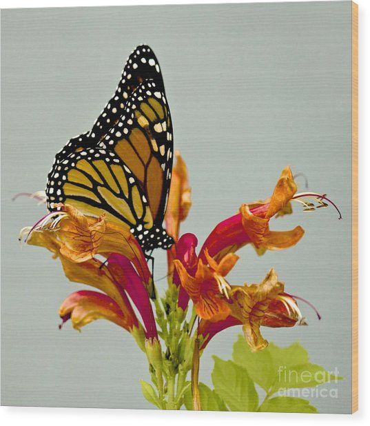 Magnificent Monarch Wood Print