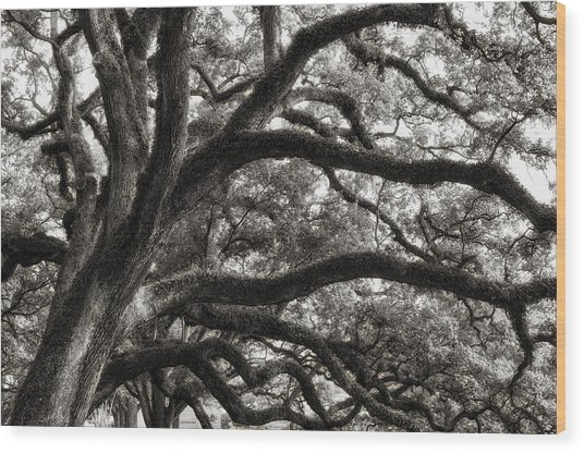 Magnificent Oaks Of Louisiana Wood Print