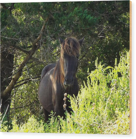 Magnificent Wild Horse Wood Print