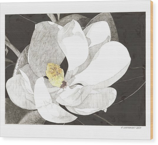 Magnolia 1 Wood Print by Paul Shafranski