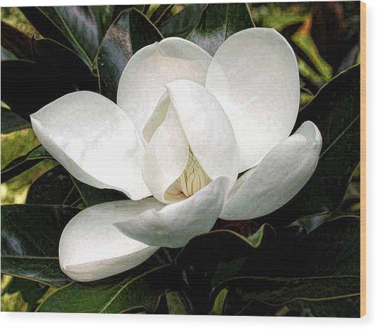 Magnolia Bloom Wood Print