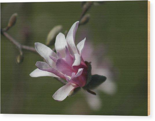 Magnolia Blossom Series 701 Wood Print