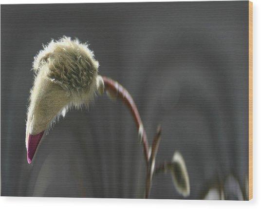 Magnolia Blossom Series 703 Wood Print