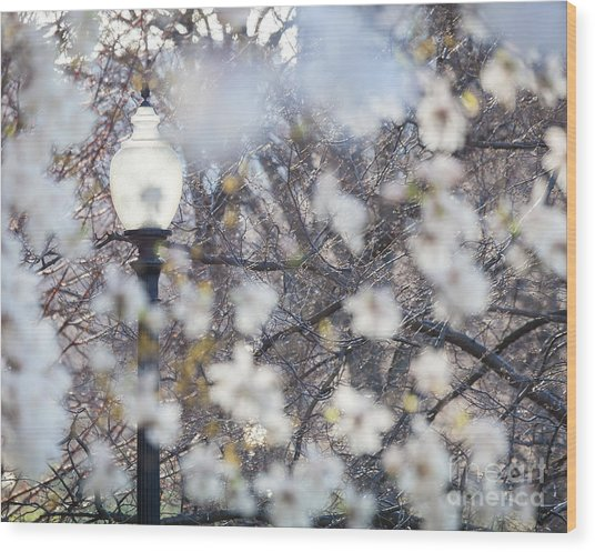 Magnolia Impression 1 Wood Print