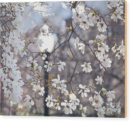 Magnolia Impression 2 Wood Print