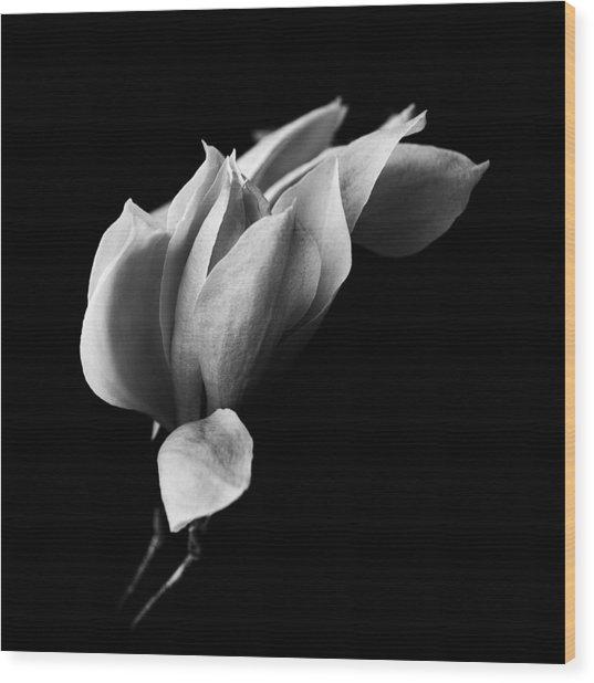 Magnolia Wood Print by Mayumi Yoshimaru