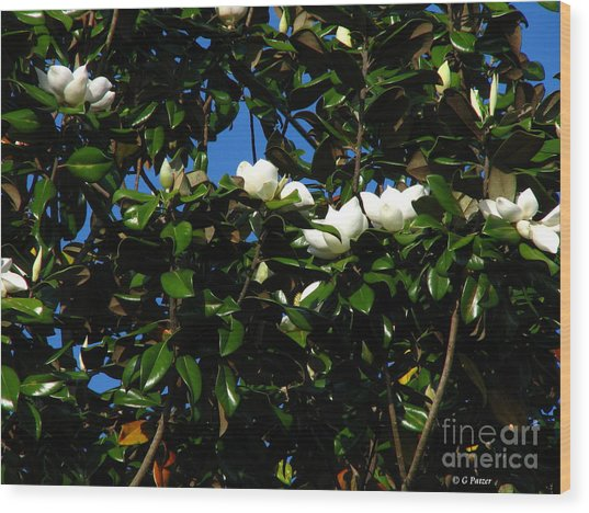 Magnolia Setting Wood Print by Greg Patzer