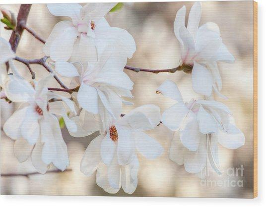 Magnolia Spring 1 Wood Print