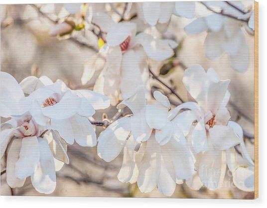 Magnolia Spring 2 Wood Print