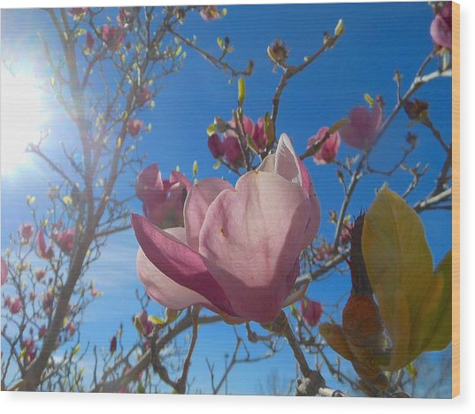 Magnolia Tree 1 Wood Print