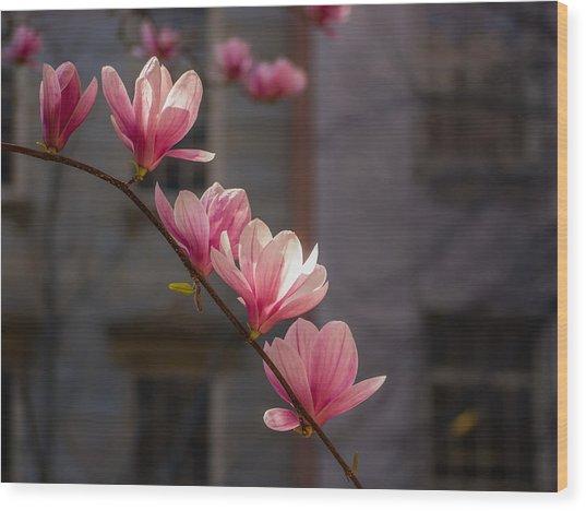 Magnolia's Descent Wood Print