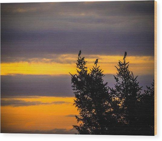 Magpies At Sunrise Wood Print