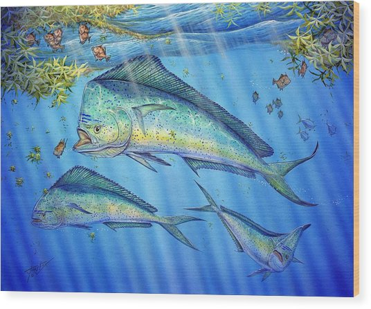 Mahi Mahi In Sargassum Wood Print