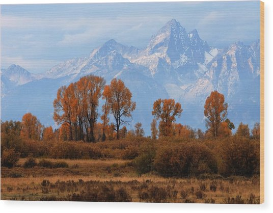Majestic Backdrop Wood Print