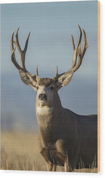 Majestic Buck Wood Print