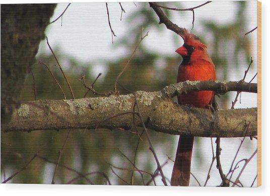 Majestic Cardinal Wood Print