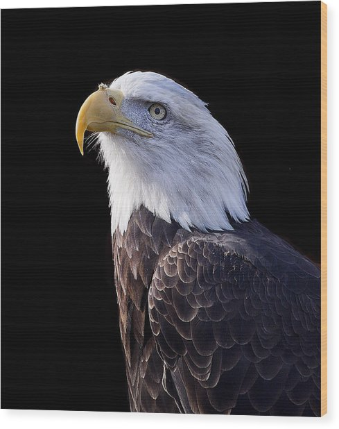 Majestic Eagle Wood Print