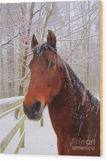 Majestic Morgan Horse Wood Print