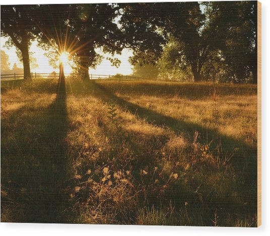 Majestic Oaks Sunrise Wood Print