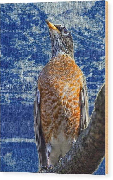 Majestic Robin Blues Wood Print by Bill Tiepelman