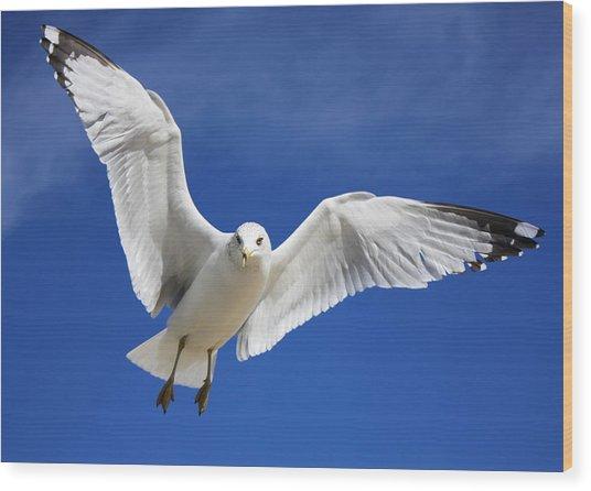 Majestic Seagull Wood Print