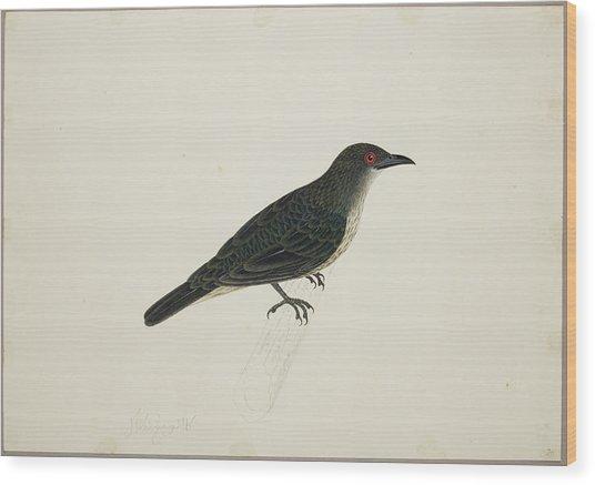 Malay Glossy Starling Wood Print