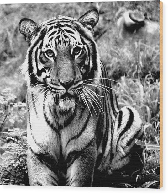 Malayan Tiger Wood Print