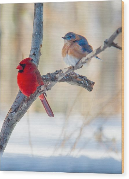 Male Bluebird And Cardinal On Branch Wood Print