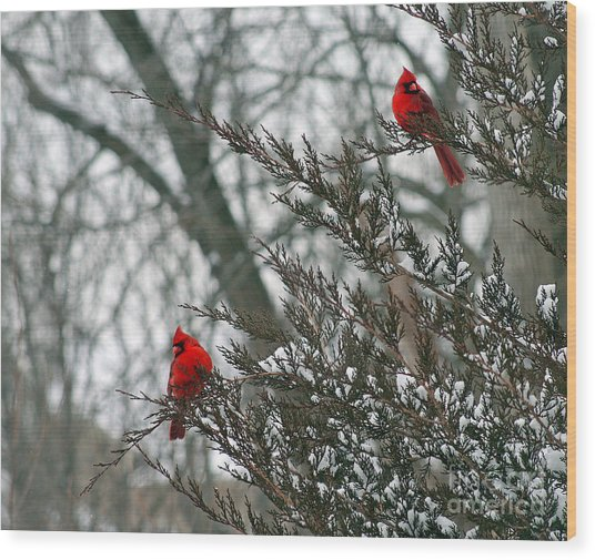 Male Cardinal Pair Wood Print