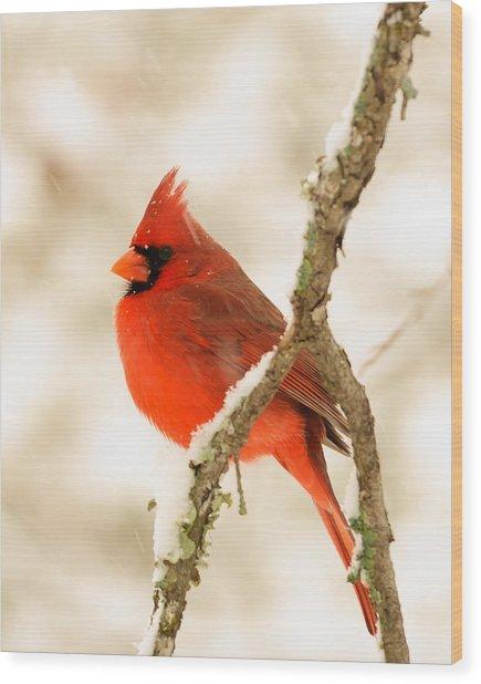 Male Cardinal Wood Print by Thomas Pettengill