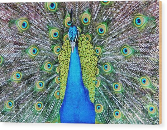 Male Peacock Wood Print