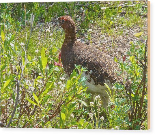 Male Ptarmigan Along Savage River Trail In Denali Np-ak Wood Print