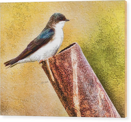 Male Tree Swallow No. 2 Wood Print