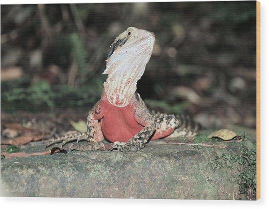 Male Water Dragon  Wood Print