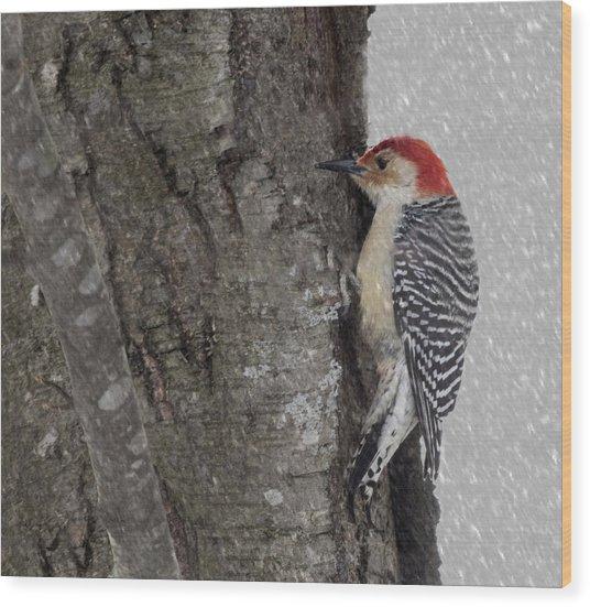 Male Woodpecker Feeding  Wood Print